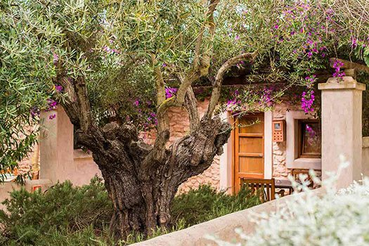 Rustic accomodation in Ibiza island